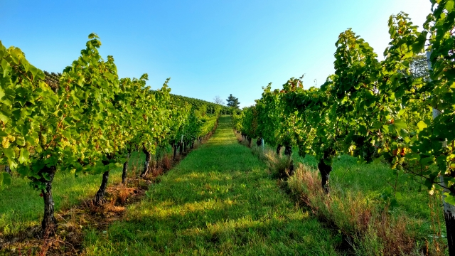 [ソムリエが解説]ワイン初心者へ、カリフォルニアワインのすすめ