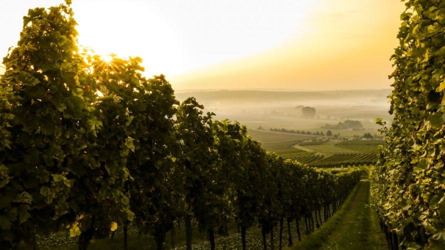 [初心者]ワインの香りを楽しもう!ソムリエが教えるワインの香りのとりかた。